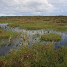 Lihula Bog, pools and hollows