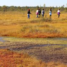 Recreational use of Soomaa NP. Colors of raised bog. Bogshoeing.