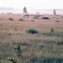 sedge fen mire partially overgrown with shrubs