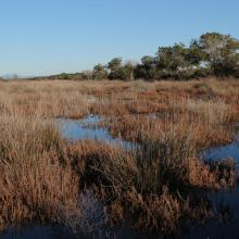 Trappola marsh