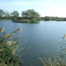 Marjal de Almenara. Panorámica de estany