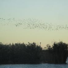 Marjal de Almenara. Panorámica con aves
