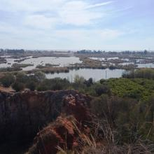 Marjal de Almenara. Antiguos arrozales recuperados