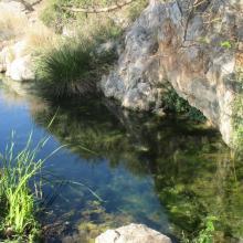 Marjal de Almenara. Detalle de surgencia de agua subterránea en rocas kársticas (ullal)