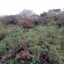 Forêt ripicole sur les berges des barrages