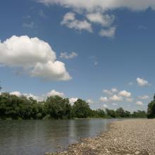 Upstream character of the Upper Tisza near the state border, with gravel shores and softwood gallery forest.