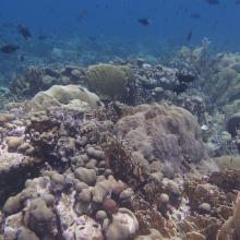 Marine life surrounding Klein Curacao