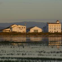 L'Albufera. Arrozal inundado y construcciones industriales tradicionales