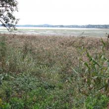 Presterødkilen nature reserve