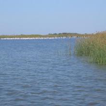 lac Bedo