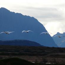 Grunnfjorden