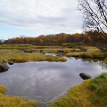 Wetland in Risøysundet