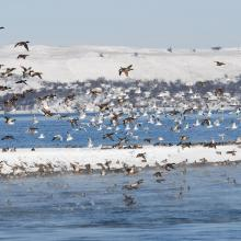 Flocks of birds in winter.