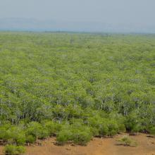 Mangroves de Sahamalaza