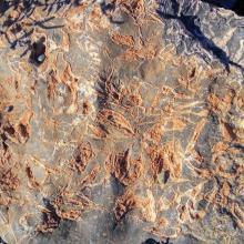 Valeurs culturelles : gravures rupestres sur roche