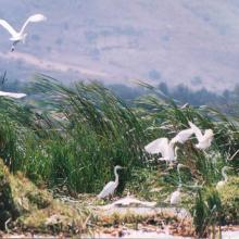 Aunque muchas aves permanecen todo el año en la Laguna de Zapotlán, hay otras especies que vienen a pasar sólo el invierno, como es el caso de los patos pijijes, el ibis espátula, la gallardeta morada, la garza patamarrilla, pelícanos y cigueñas, incluso la jacana de Centroamérica.