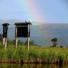 Rainbow in the delta. Two Arctic terns rest on the information boards.