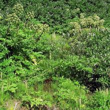The lush vegetation at a homeothermic spring.