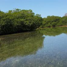 Humedal de Santa Elena