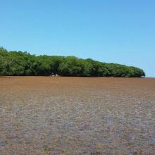 Manglar y pasto marino en el Sistema de Humedales de Santa Elena.