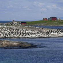 Bird colony at one of the islands in the arcipelago